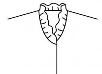 衿型_ギャザーフリル